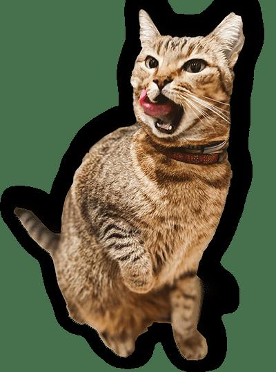 Ann Arbor and Ypislanti Cat Sitter Pet Sitter Dog Walker