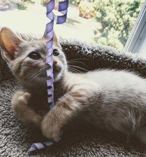 Cat Sitting Services - Ann Arbor MI