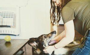 Perna Pet Care - Book Online