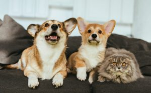 Cat Sitter Specialists, Dog Walking and Pet Sitting in Ann Arbor